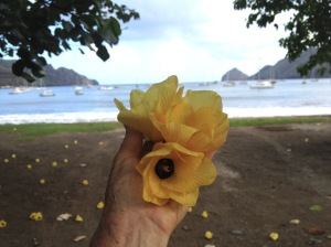 24. Flowers from this tropical tree in Nuku Hiva fell every day.  Joyful's anchorage is in the distance.
