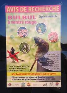 25. A poster in Bora Bora warning about the invasive red-vented bulbul bird that is destroying plant and animal life in French Polynesia.  It says to call the police if you sight one.