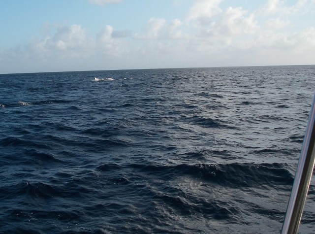 23.  A humpback whale's tail dissapeared into the water in back of Joyful as we sailed toward Joyful's anchorage in Tonga