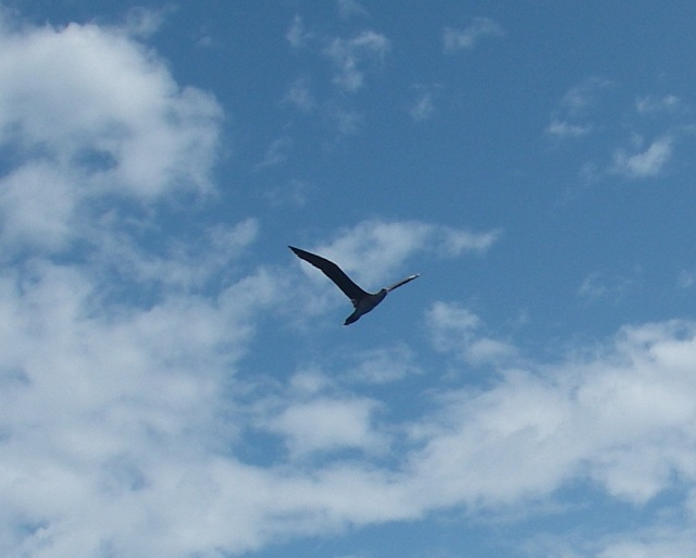 19-this-sea-bird-flew-around-joyful-for-around-an-hour