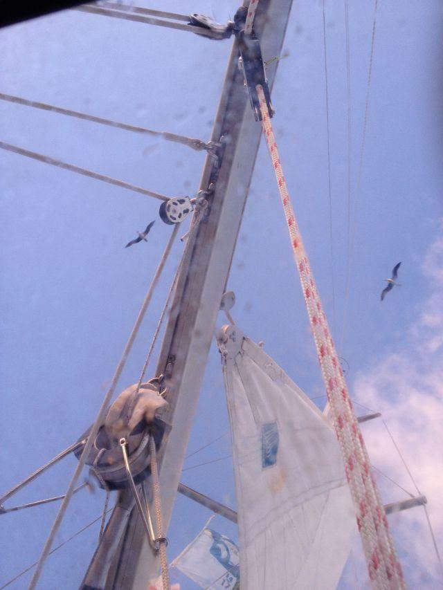 21-two-seabirds-soared-close-to-joyfuls-masthead