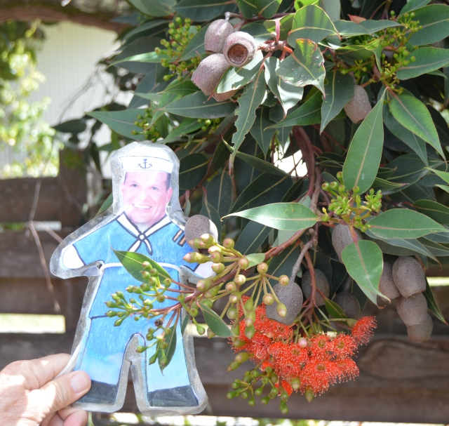 144. Flat Mr. Davis and some gum blossoms and pods in Wonthaggi, Victoria, Australia