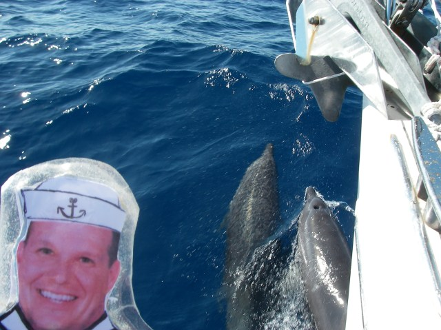 47. Flat Mr. Davis made friends with Joyful's dolphins