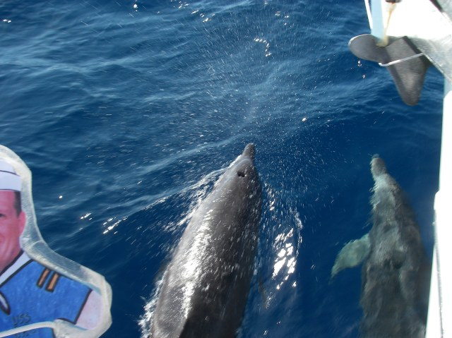 48. Flat Mr. Davis met Joyful's dolphin friends