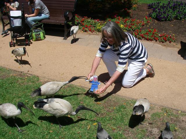 51.1. Birds - Flat Mr. Davis and Anne feed a granola bar to some wild ibis birds in Sydney, Australia
