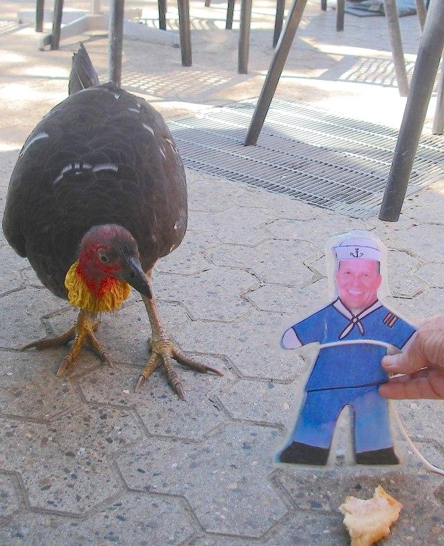 54. Birds - Flat Mr. Davis feeds a wild Australian turkey a piece of bread in Sydney, November 2015