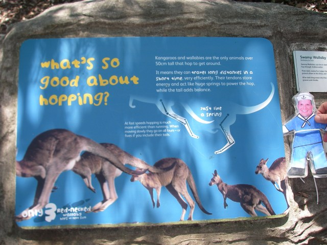 58. Flat Mr. Davis read how kangaroos and wallabies hop