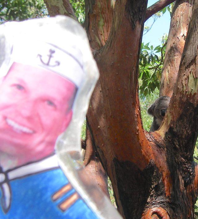 59. Flat Mr. Davis saw another koala wake up to eat Eucalyptus leaves