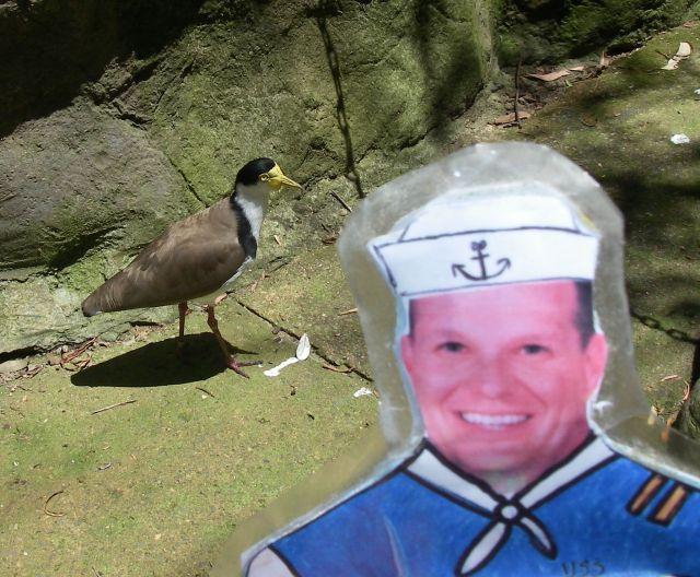 67. Flat Mr. Davis met this beautiful bird in Sydney